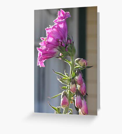 Foxy flower Greeting Card