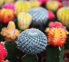 Cactus, Flowers, Spines - Pink Green Blue Yellow  by sitnica