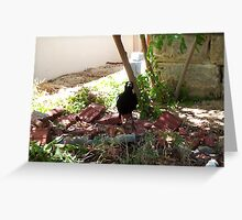 Magpie One - 16 11 12 Greeting Card