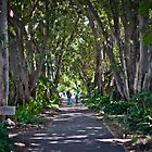 Adelaide Botanical Gardens by Clintpix