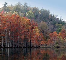 Water's Edge by Carolyn  Fletcher