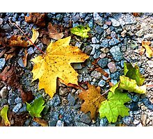 Touched By Autumn Photographic Print