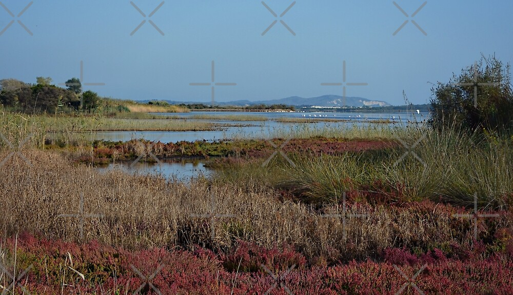 Wetland ;Corfu; Greece by fruitcake