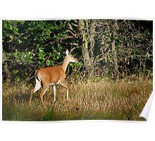 Fountainhead Deer Poster