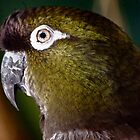 Green Parrot by pcfyi