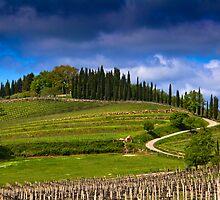 Vineyard in Tuscany by vivsworld