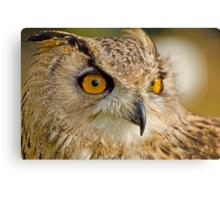 Bengal Owl Canvas Print