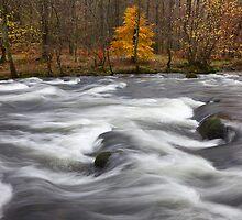 Rothay Rapids by Nick Atkin