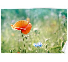 Poppy in blue and green field 1 Poster