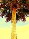 Sabal Palm by AuntDot