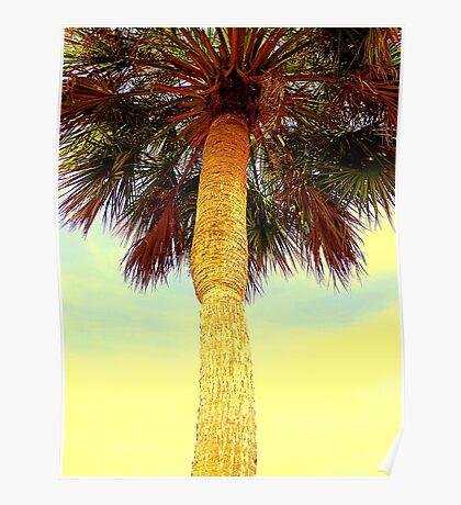 Sabal Palm Poster