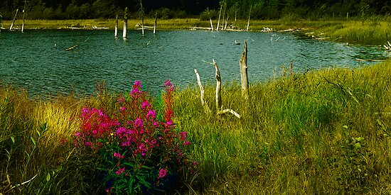 Fireweed at a Pond by Yukondick