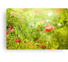 Cheerful poppy in summer green  Canvas Print