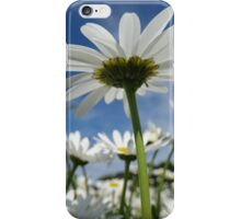 Daisy Flowers, Petals, Blossoms - White Green iPhone Case/Skin