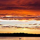 Swan Sunset #1 by Daniel Frei