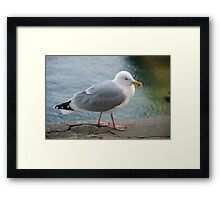 Seagull on harbourside wall, Salcombe, Devon, UK Framed Print