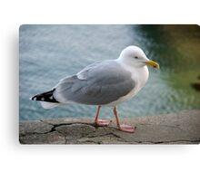 Seagull on harbourside wall, Salcombe, Devon, UK Canvas Print