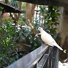 A White Dove by PhosGraphe