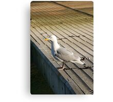 Seagull on pontoon, Salcombe, Devon, UK Canvas Print