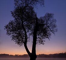 A Tree Stands Alone by Daniel Frei