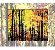 Fall Tree Line - Red/Yellow Photographic Print