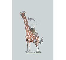 Giraffes Love College Photographic Print