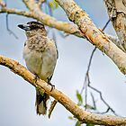 Butcher Bird  by Cheryl Styles