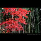 Red And Green Contrast  by © Sophie W. Smith