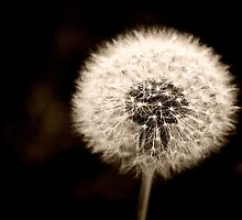 Dandelion by Pant52005