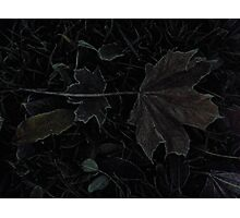 Autumn - First Frost (High ISO) Photographic Print