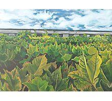 Foliage  Photographic Print