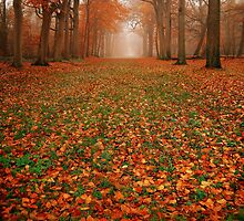 Endless Autumn by PhotoDream Art