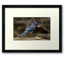 Feeding the Blue Jays Framed Print