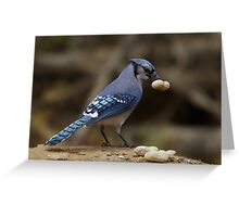 Feeding the Blue Jays Greeting Card