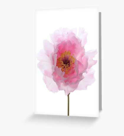 Pink Tree Peony. Greeting Card