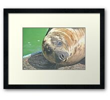 Cute Seal Close-Up Framed Print