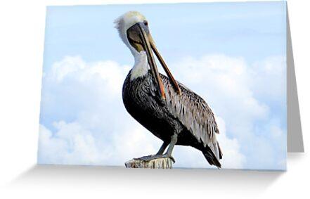 Pelican Twist by AuntDot