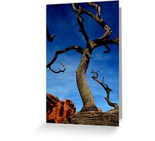 Gnarled Landscape Greeting Card