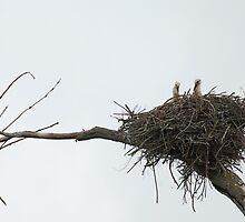 Storks of  Provence, France by Marie Watt