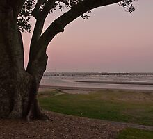 Standing sentinel at Shornecliffe QLD Australia by PhotoJoJo
