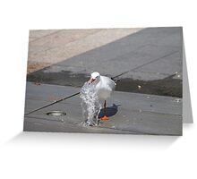 Seagull having a drink Greeting Card
