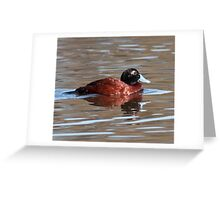 Blue-billed Duck Greeting Card