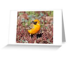 Orange Chat Greeting Card
