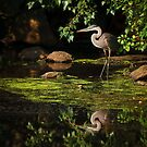 Reflective Heron by Owed To Nature