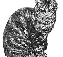 Tabby Cat by Antony R James