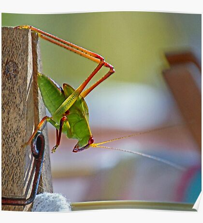 Grasshopper on the washing Poster