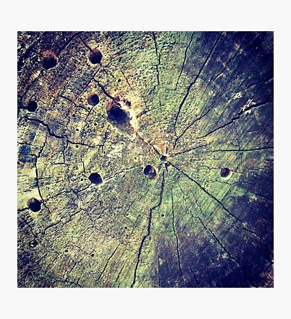 Nature Rings Photographic Print
