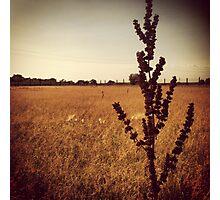 Wisconsin Prairie Photographic Print