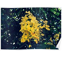Tropical Winter Flowers Poster