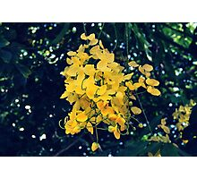 Tropical Winter Flowers Photographic Print